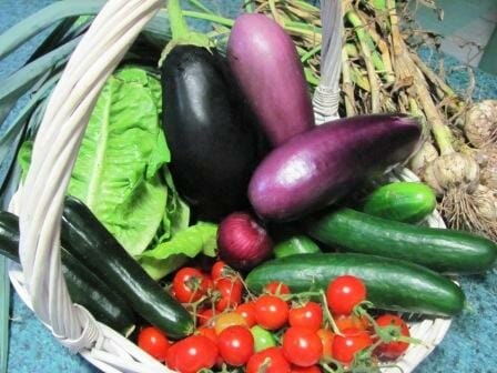 A variety of vegetables freshly picked from our small garden