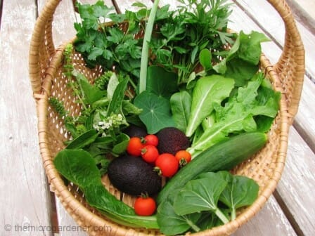 Salad ingredients freshly harvested from our garden | The Micro Gardener