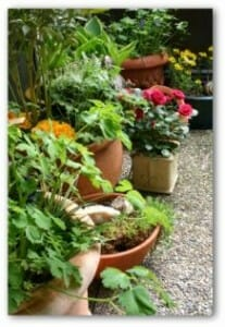 Containers can be used to grow beautiful yummy and fragrant plants.