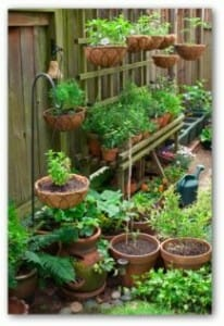 Small space gardens can be beautiful, abundant and low maintenance.