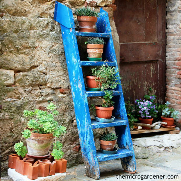 A ladder with pots can optimize your vertical space while adding an attractive feature in a small garden design | The Micro Gardener