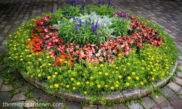 Circular garden with colourful flowers as feature in small garden design | The Micro Gardener