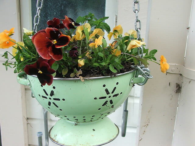 Colander planter with colourful petunias | The Micro Gardener @ www.themicrogardener.com