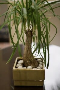 Houseplants help keep us healthy by cleaning our indoor air from toxins. | The Micro Gardener @ www.themicrogardener.com