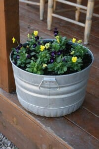This metal tub of pansies is positioned in a sheltered spot so it won't cook the flowers!