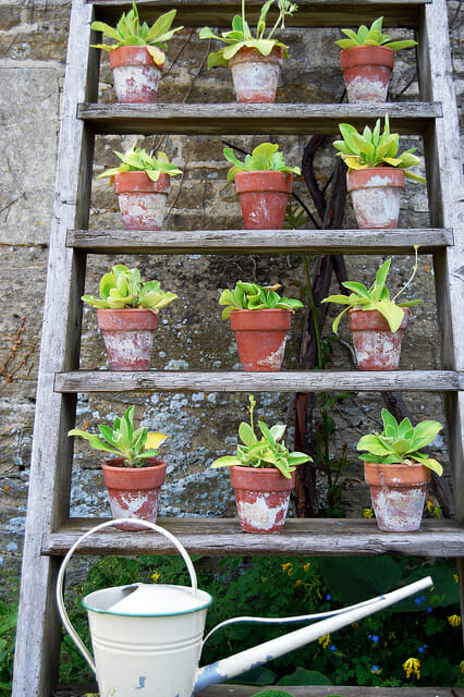 Plant ladder great use of vertical space | The Micro Gardener