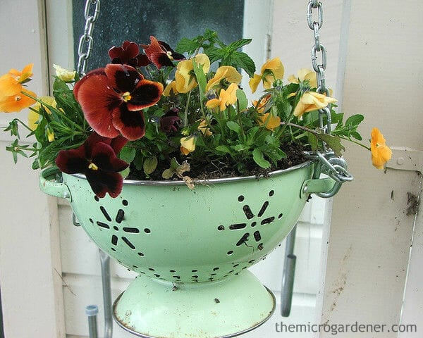 Turn a vintage colander into a stylish hanging planter. The holes provide decoration as well as practical drainage. Small garden design idea. | The Micro Gardener