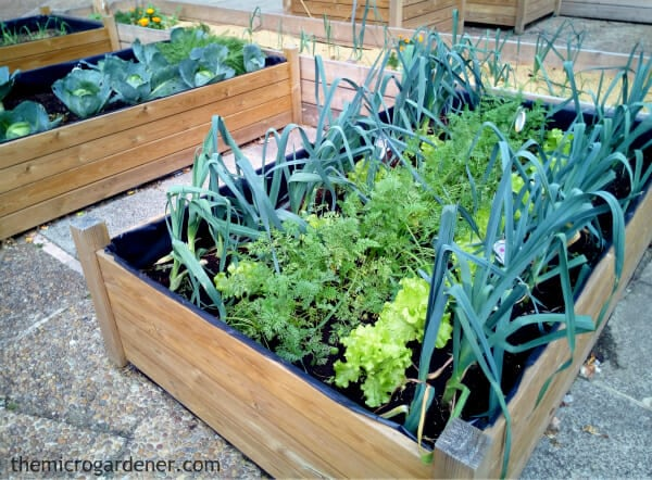 With great drainage, easy access and compact growing space no-dig garden beds are a great choice for micro gardeners. Small garden design ideas. | The Micro Gardener