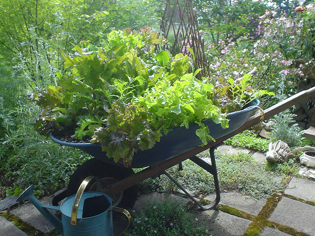 Wheelbarrow planter - deep enough to grow both veggies and salad greens  | The Micro Gardener