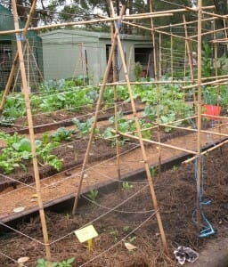 Bean trellises and bamboo tepees are great fun to make