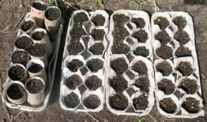 Egg carton & toilet roll seed raisers - www.themicrogardener.com