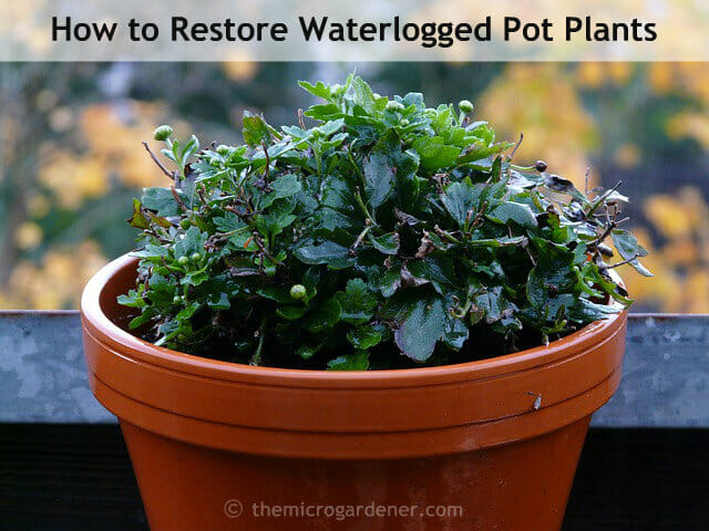 There ARE easy, low-cost solutions to save your plants from drowning, disease and  contamination