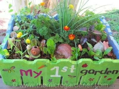 Kids salad garden in a box | The Micro Gardener
