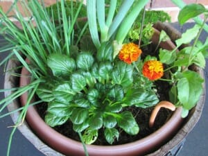 Colourful veggie garden in a pot