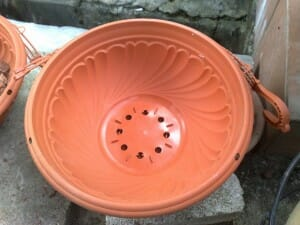Plastic pot with adequate drainage holes