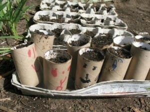 Raising seeds in toilet roll & egg carton pots - www.themicrogardener.com
