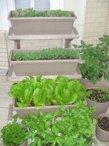 Crop rotation is important in containers