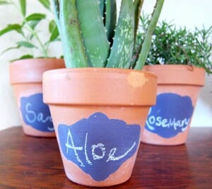 Simple inspiring design ideas for small gardens include growing medicinal and culinary herbs in colourful pots