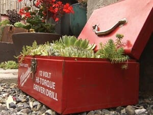 A colorful metal drillbox serves as a planter for sempervivums and sedums.  | The Micro Gardener www.themicrogardener.com
