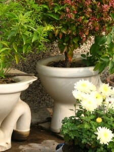 Porcelain planters seem to be quite popular in some gardens.