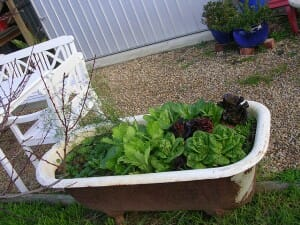 Rather than throwing old items away, give them a new life and reuse them like this bathtub garden.