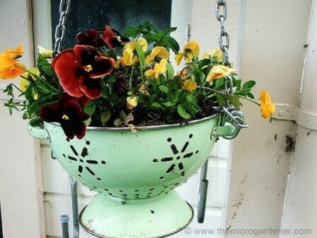 Colander planter filled with bright cheerful pansies brings a splash of colour to the verandah. | The Micro Gardener www.themicrogardener.com