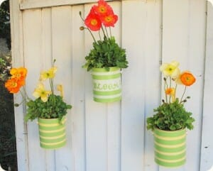 Old tin cans in a variety of sizes can be easily made into planters with a few drainage holes in the bottom.