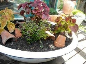 Old metal wash basin planter with terracotta pot garden art  | The Micro Gardener www.themicrogardener.com