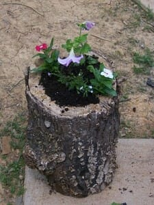 A micro garden in a rotten log is just one example of reusing natural resources in your backyard.