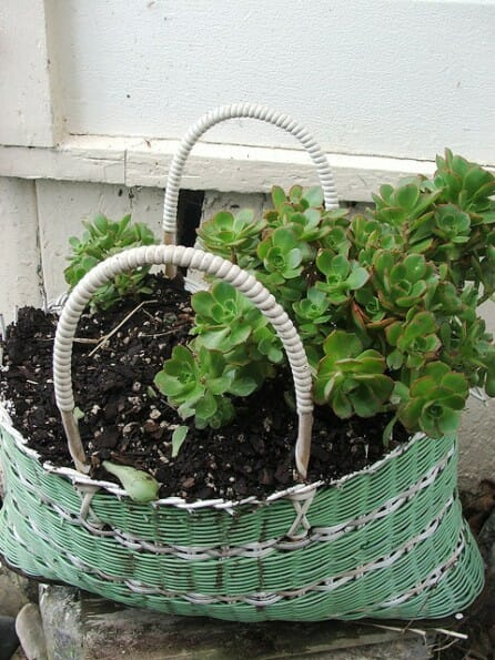 Succulents in basket are a low maintenance garden to give a friend. | The Micro Gardener