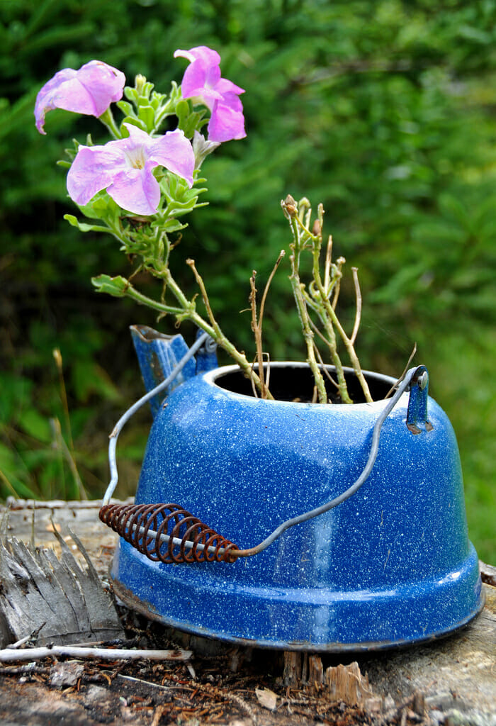 Kettle planter | The Micro Gardener @ www.themicrogardener.com