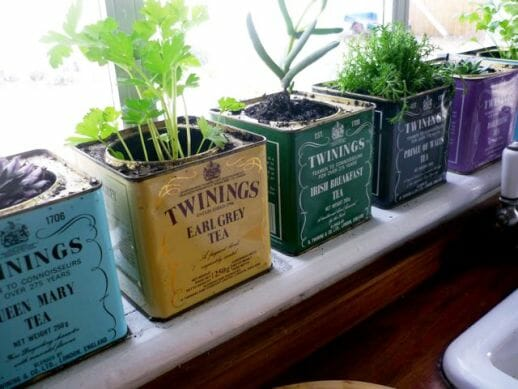 Twinings Tea Tin Windowsill Planters - Items you might otherwise throw away can be useful plant containers instead. | The Micro Gardener
