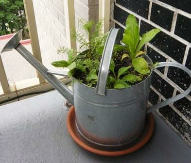 Watering can planter | The Micro Gardener
