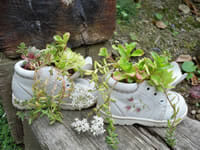Why throw old shoes or boots when the heel goes or they're a bit worn when they can make a fun planter?  | The Micro Gardener www.themicrogardener.com