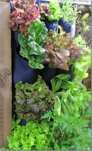 Emily's closet shoe organiser lettuce garden.