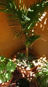 Create a microclimate by grouping tall plants with understorey