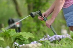 Ten Water Saving Tips for Your Garden