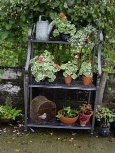 This space saving idea uses repetition with variegated foliage & pots to great advantage and really dresses up this micro garden.  | The Micro Gardener