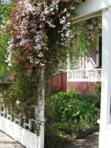 This jasmine privacy screen makes good use of the vertical posts at the front entrance to make this garden inviting.