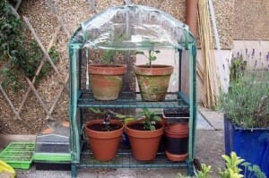 Mini greenhouses are a clever option for micro gardeners with limited space.  | The Micro Gardener