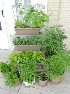 Productive high yielding crops in a mini vertical garden | The Micro Gardener