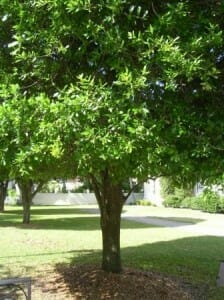 Prune lower tree branches to lift the canopy and minimise water needs.