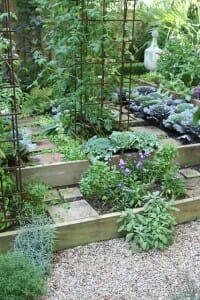 Raised kitchen garden beds with herbs and vegies.