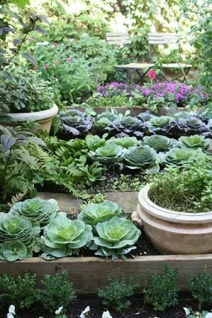 Tiered raised kitchen garden beds are filled with delicious edibles.  | The Micro Gardener