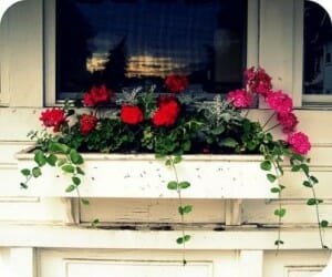 Window boxes are a quaint and low cost option for easy access gardens that add character at the same time.  | The Micro Gardener