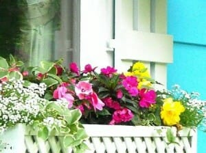 Beautiful window box with potted colourful flowers - easy to care for and a stunning view from inside! Photo: Anslatadams