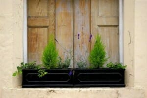 Window boxes can be detached or hung off railings and are only limited by your imagination.  | The Micro Gardener