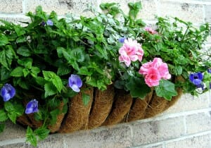 Wall mounted metal planter with a moisture holding coir base filled with colour.  | The Micro Gardener