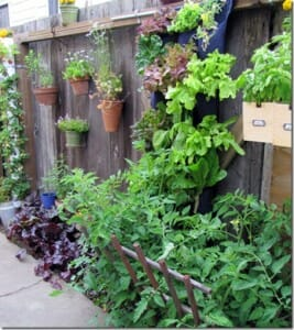 Vertical gardens take advantage of narrow garden beds and upright structures like this fence.  Image via: www.gardeninggonewild.com