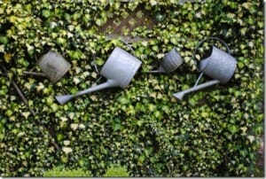 A collection of watering cans are affixed to this green wall as a decorative feature.
